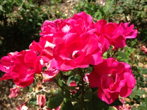 aerlie flower
