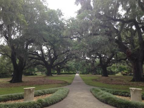 brookgreen oaks