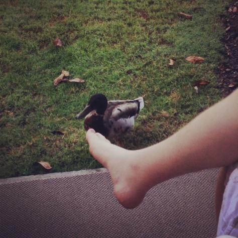 toe duck