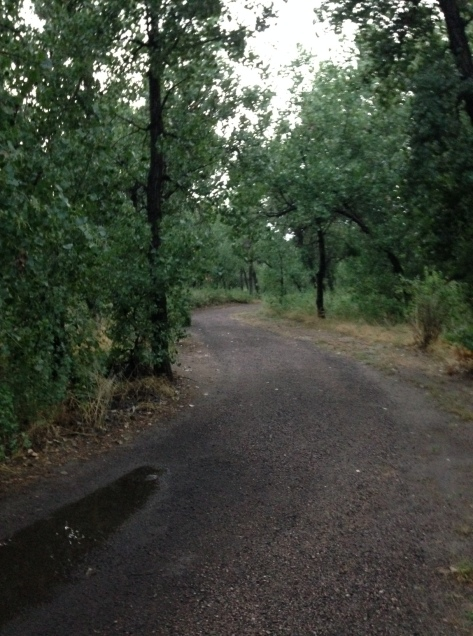 It rained pretty much all night Tuesday and all day Wednesday, but stopped long enough for me to run. The rain made my usual park look pretty.